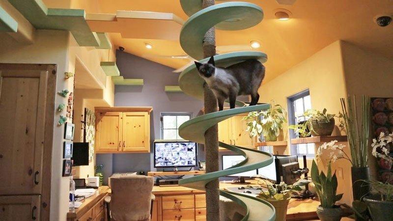ristrutturare la casa per il proprio gatto